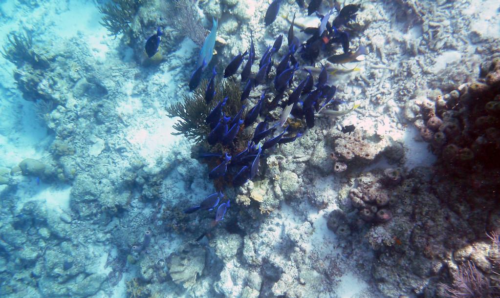 Bonaire snorkeling tour