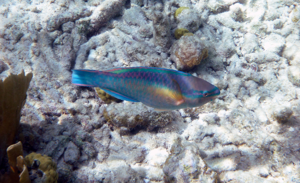 Things to do in Bonaire - Snorkeling and scuba diving