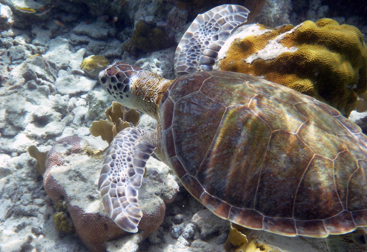 Caribbean-Bonaire46-X2.jpg