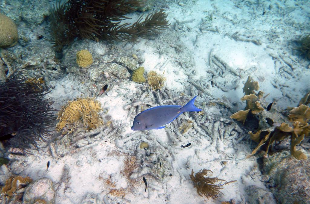 Bonaire Snorkeling Trip