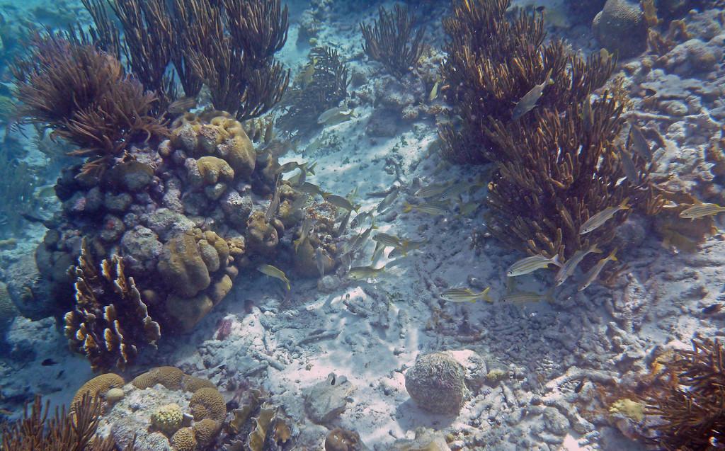Bonaire Snorkel Tours