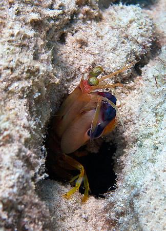 Bonaire (Sept 2012) - Crustaceans