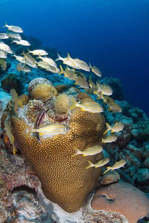 Bonaire (Sept 2012) - Fish