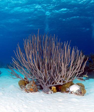 Bonaire (Sept 2012) - Reef
