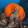 Bonaire Dive Trip