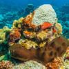 Dark Volcano Sponge:  phylum Porifera; Cozumel, Mexico