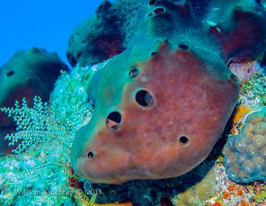 Cozumel invertebrates