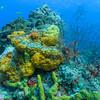 Orange Lumpy Encrusting Sponge, Stinging Bush Hydroid (phylum Cnidaria - class Hydrozoa); Cozumel, Mexico