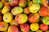Closeup of mangos for sale at the fresh fruit market on the Punda side in Willemstad, Curacao, Caribbean.