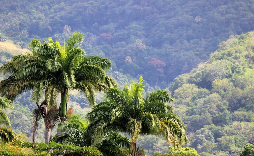 Dominica is the Nature Island, so green and lush
