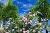 Tropical vegetation in Roseau, dominica, West Indies.