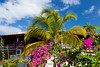 Tropical foliage at the Fort Young Hotel resort in Roseau, Dominica, West Indies.