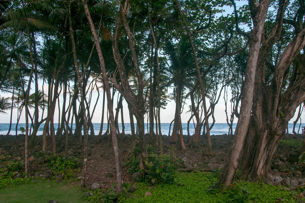 Trees along the beach in Dominica