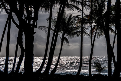 Silhouette of trees on the beach of Dominica