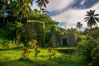 Rainforest on the island of Dominica