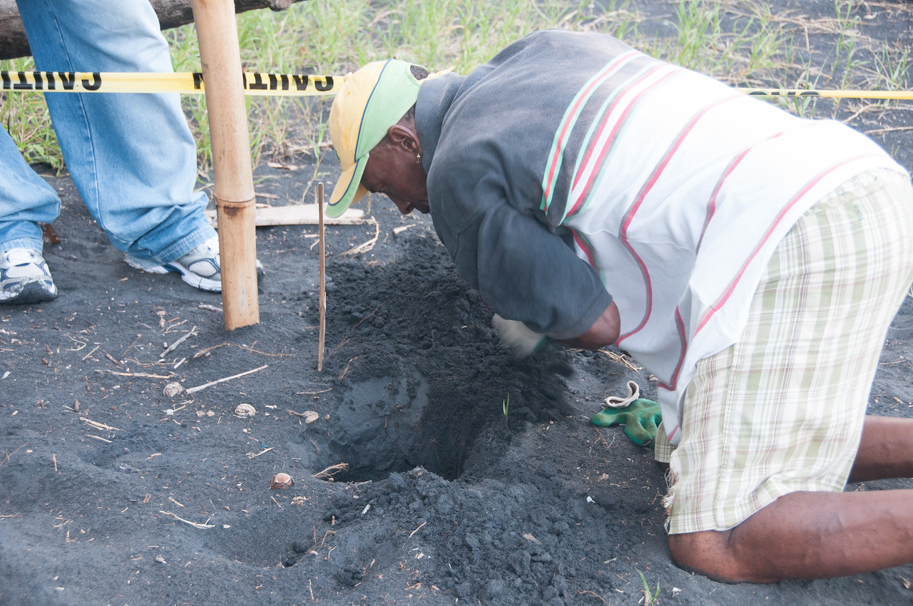 Man digging for turtles on the beach - Dominica