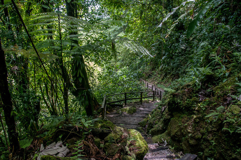 Hiking trail in the rainforest of Dominica