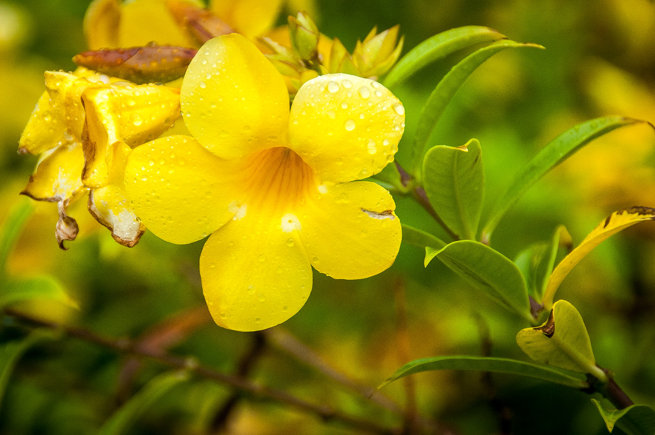 Close-up of flowering plant in the island of Dominica