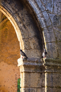 Pigeons and dogs now call the ruins of the Monastery of San Francisco home in Santo Domingo's Zona Colonial