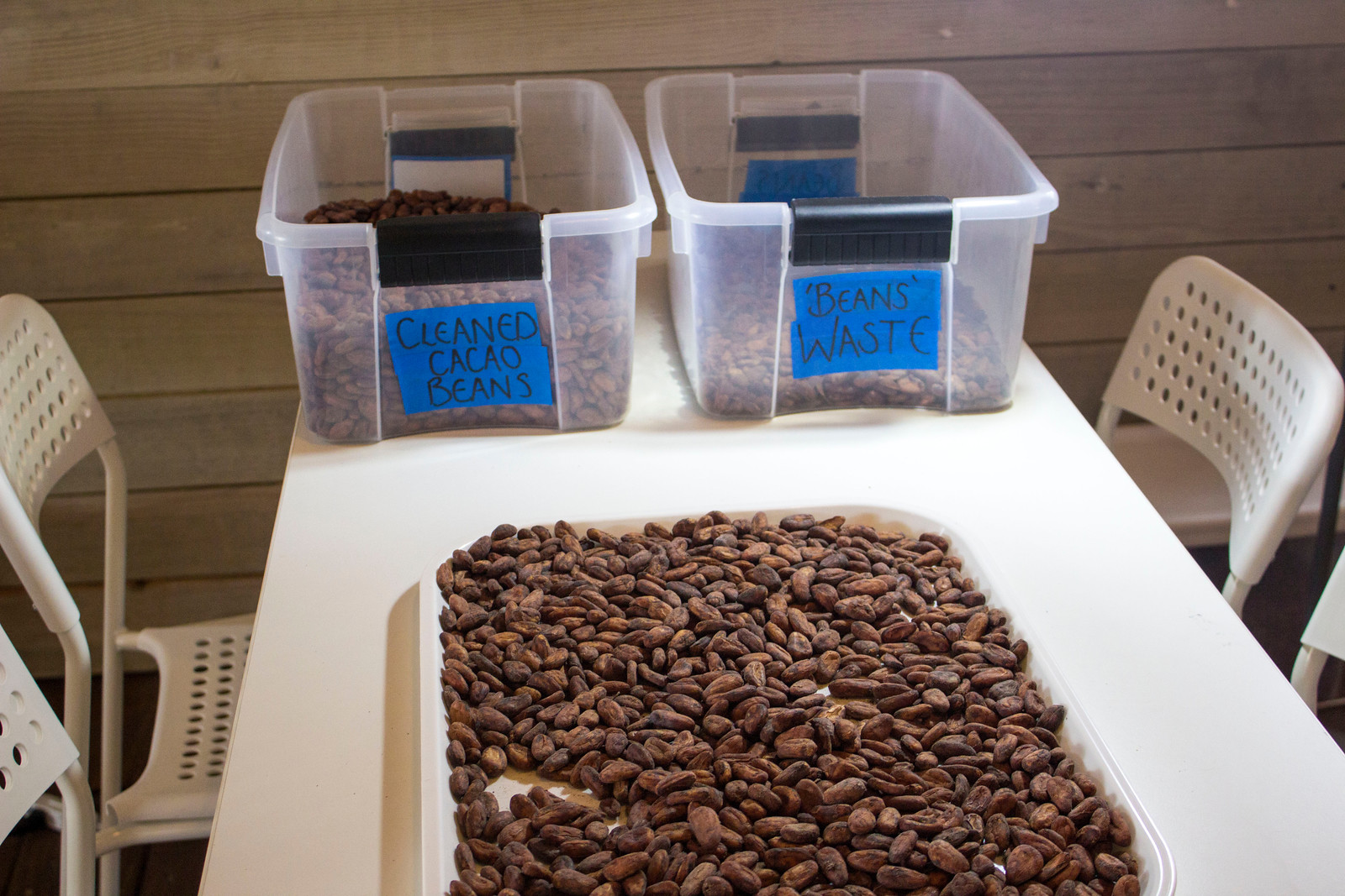 Amber Cove Cruise Port Guide - Dominican Republic - Chocolate cocoa bean sorting