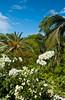 Tropical vegetation on the Grand Cayman Islands.