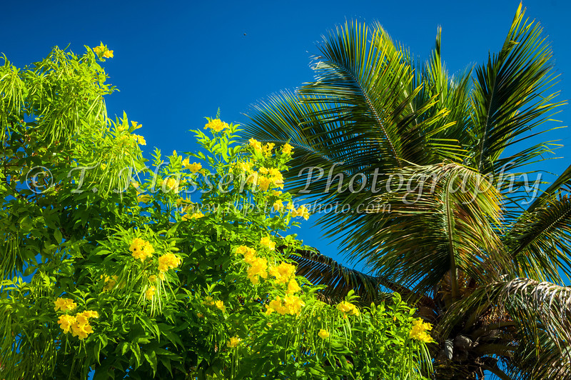 Grand turk cockburn town topstockphoto a palm tree and a tree with yellow flowers in cockburn town grand turk mightylinksfo