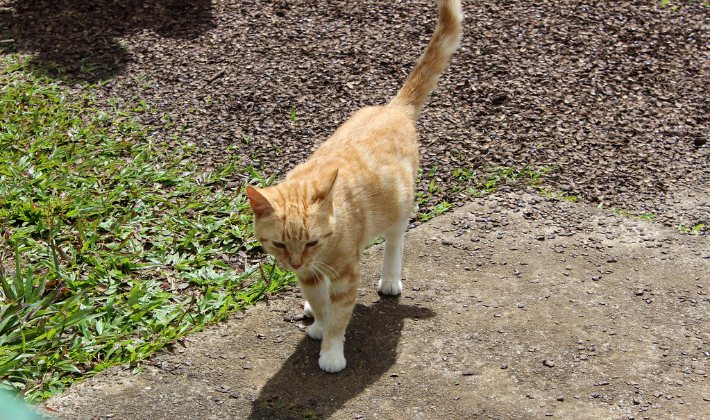 Cat at Grand Etang National Park