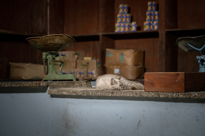 Cat in a shop.