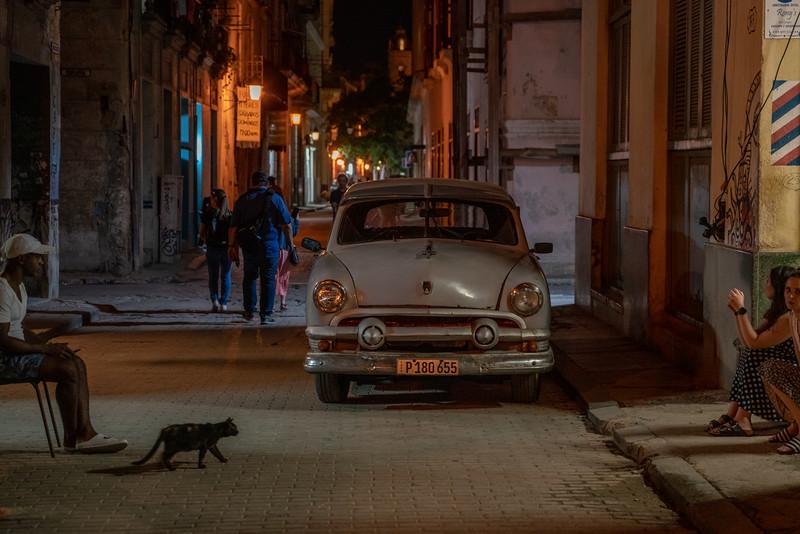 El gato de la noche.