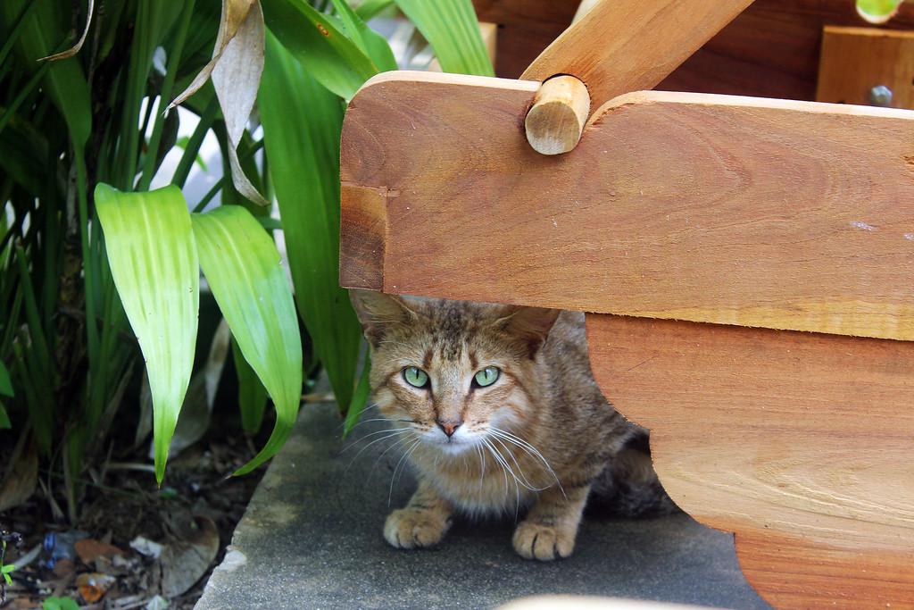 Cat at YS Falls in Jamaica