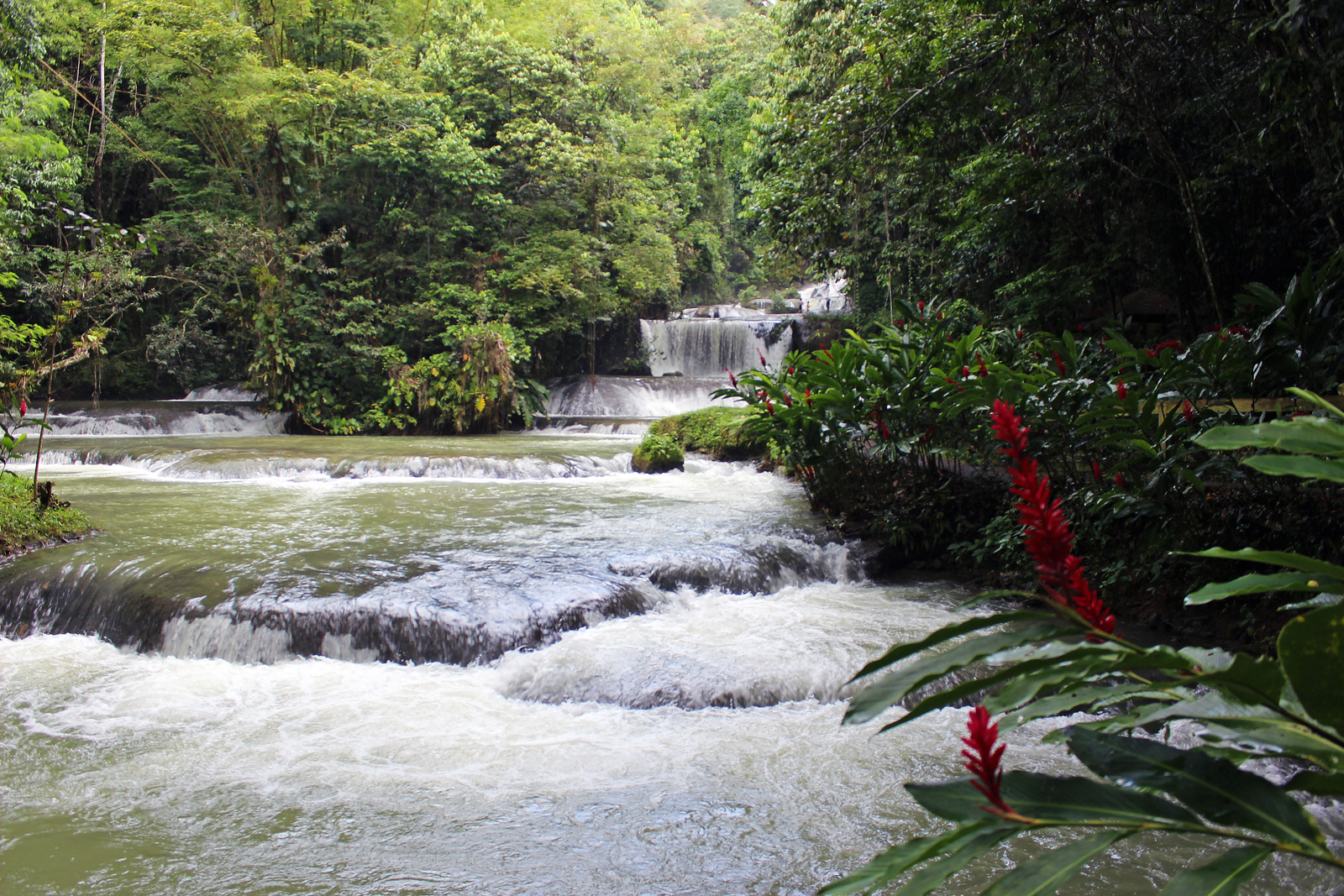 YS Falls and Black River Safari Jamaica