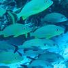 Fish - Cozumel, Mexico