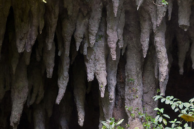 Stalactites inside Camuy River Cave Park in Puerto Rico