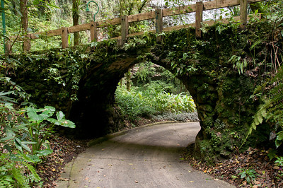 A plant covered bridge in Puerto Rico