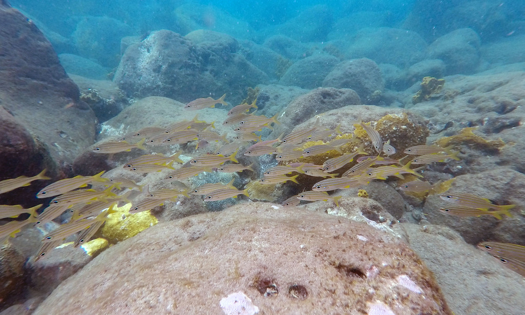 St Lucia Activities: Go Snorkeling at a Protected Reef - Things to do in St Lucia