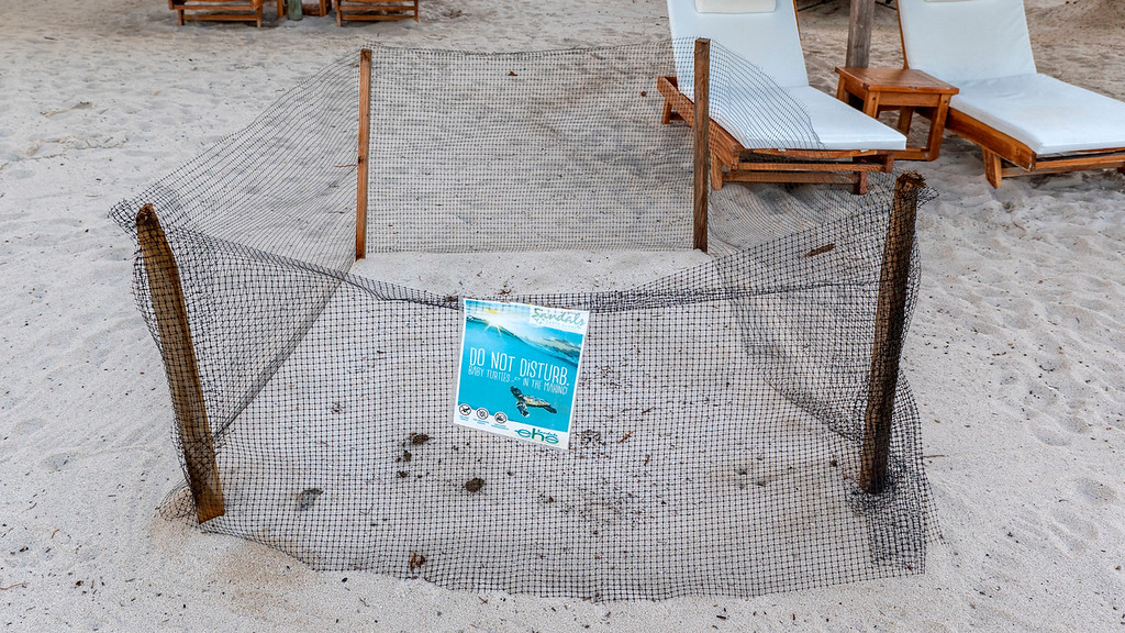 Turtle nesting site at Sandals Grande St Lucian Review resort beach