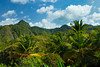 Tropical vegetation in the rural mountains of St. Lucia, Caribbean, West Indies.