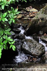 El Yunque National Park Rainforest Waterfall