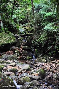 El Yunque National Park Rainforest stream