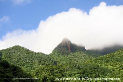 El Yunque National Park Rainforest