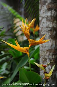 El Yunque National Park Rainforest Bird of Paradise