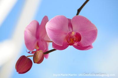 Orchids El Yunque National Park