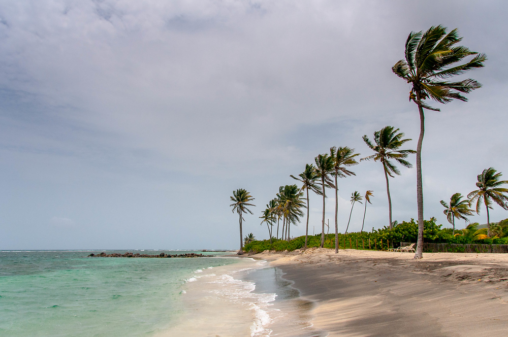 Palm Trees on a Windy Beach on Nevis