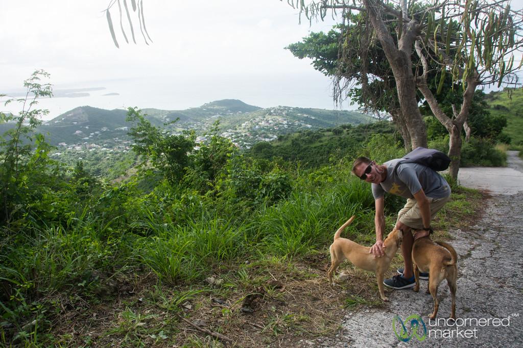 Dan Picks Up Dog Guides at Pic Paradis - St. Maarten