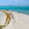 Beach in the Tobago Cays