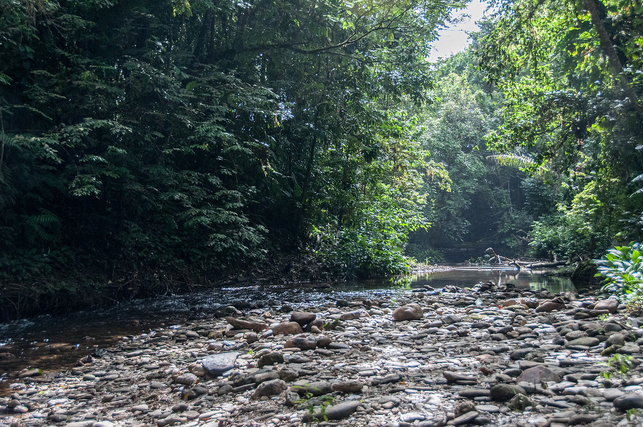 Stream from Avocat Waterfall in Trinidad, Trinidad and Tobago