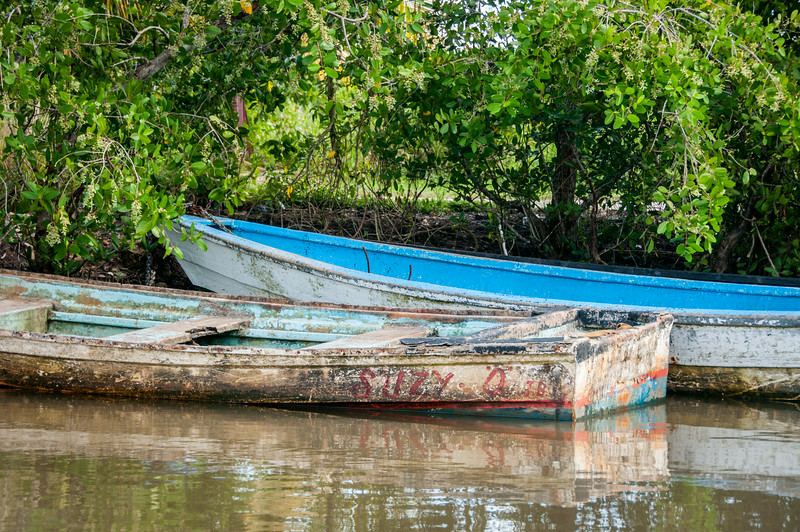 Two boats on shore along mangrove forest in Trinidad