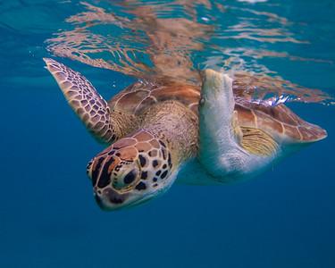 Turtle Cove 3
