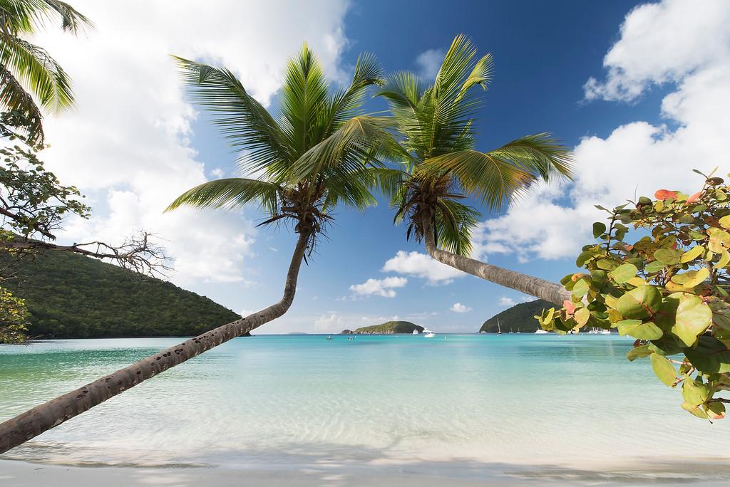 St. John Island Palm Tree Paradise