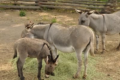 Hills Guest Ranch